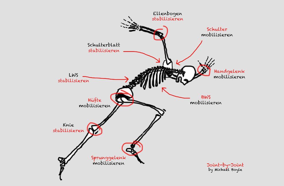 Abb. 2: Betrachtet man den Körper von unten nach oben, wechseln sich die Segmente ab, welche Stabilisierung und Mobilisierung benötigen