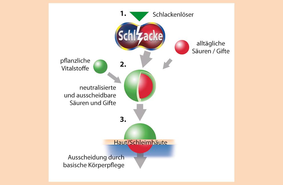 Für eine zelltiefe Gewebereinigung und -regeneration hat sich seit mehr als 20 Jahren der sogenannte Dreisprung der Entschlackung bestens bewährt.