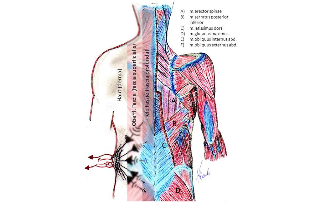 Abb.1: Der Mensch in Schichten. Zug und Druck verteilen sich in die Körperperipherie. Grafiken: Nici Mende