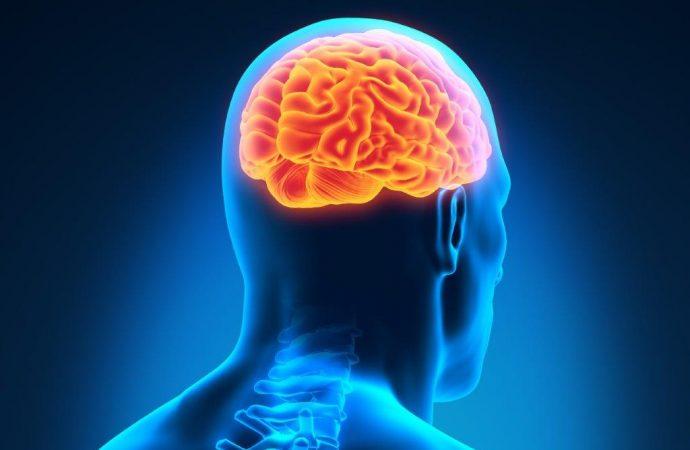 Kraft beginnt im Gehirn