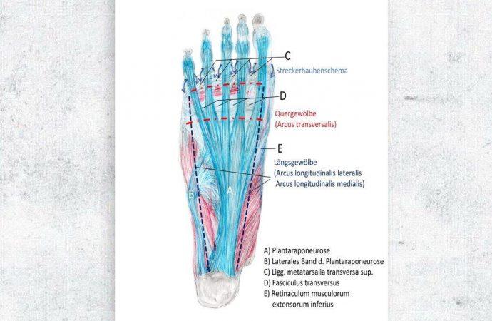 Gestatten: Die Fußstrukturen