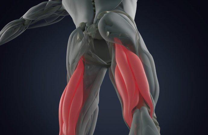 Hamstrings – Anatomie und Biomechanik